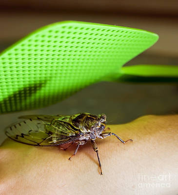 Swatting Fly Photograph - Bug Swat by Tim Hester