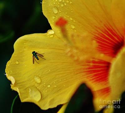 Bugged Hibiscus Art Print