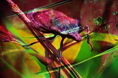 Photograph - Buggin by Skip Hunt