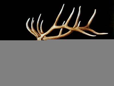 Bugle Art Print by Minisa Robinson