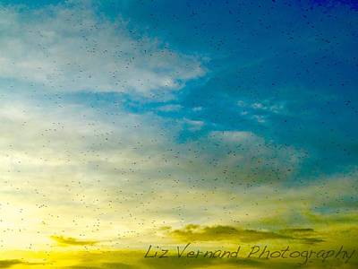 Photograph - Bugs At Sunset by Liz Vernand