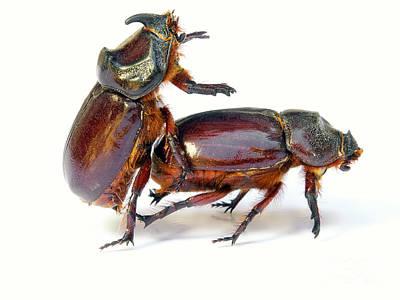 Coy Fish Michael Creese Paintings - Bugs sex by Sinisa Botas