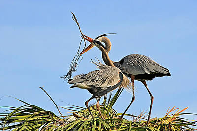 Photograph - Building A Nest by Ira Runyan