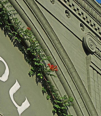 Photograph - Building Detail With Vines by Deborah Smith