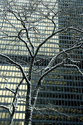 Soap Suds - Building Reflection and Tree by Rick Shea
