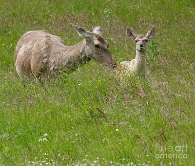 Photograph - Bukhara Deer -  Hind And Calf by Phil Banks