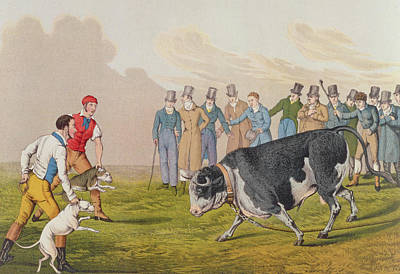 Cattle Dog Painting - Bull Baiting by Henry Thomas Alken