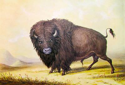 Indian Brave Digital Art - Bull Buffalo by George Catlin