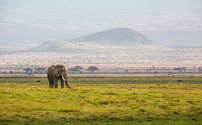 Photograph - Bull Elephant In Amboseli by June Jacobsen