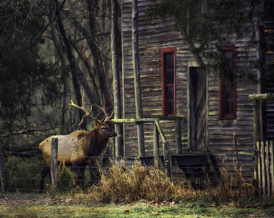Moody Trees - Bull Elk by the Old Boxley Mill by Michael Dougherty