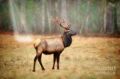 Photograph - Bull Elk In Field by Dan Friend