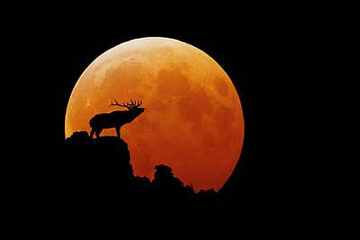 Bull Elk Original