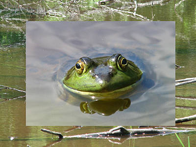 Photograph - Bull Frog And Pond by Natalie Rotman Cote