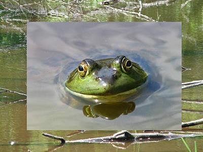 Bull Frog And Pond Art Print