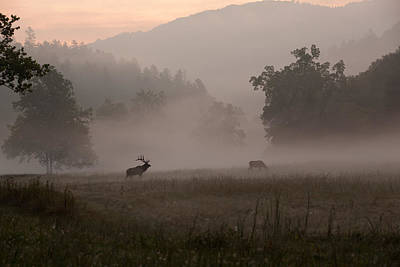 Photograph - Cataloochee Valley by Doug McPherson