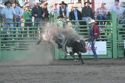 Photograph - Bull It by Liz Marr