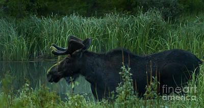 Owls - Bull Moose   #5701 by J L Woody Wooden