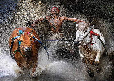 Jockeys Photograph - Bull Race by Wei Seng Chen