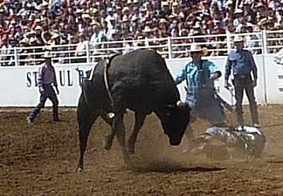 Photograph - Bull Riding Falling Off  by Susan Garren