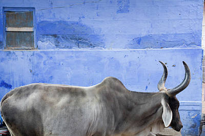 India Photograph - Bull Street Of Old City by Brent Winebrenner