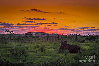 Barbwire Photograph - Bull Sunset by Marvin Spates
