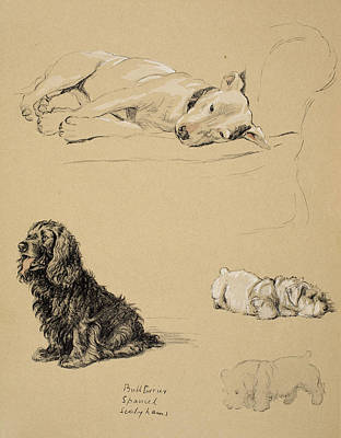 Spaniel Drawing - Bull-terrier, Spaniel And Sealyhams by Cecil Charles Windsor Aldin