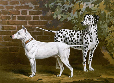 Bull Terrier Mixed Media - Bull Terrier With Dalmatian by Charlie Ross