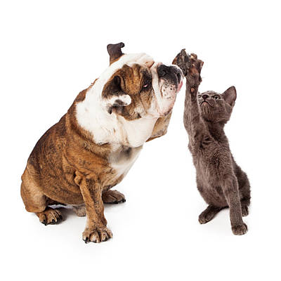 Bulldog And Kitten High Five  Art Print