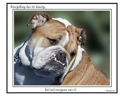Photograph - Bulldog Beauty by Carol Erikson