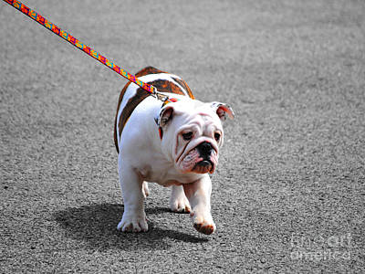 Photograph - Bulldog Puppy I by Jai Johnson