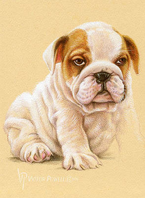Puppies Mixed Media - Bulldog Puppy Portrait by Victor Powell