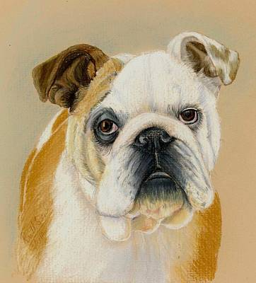 Painting - Bulldog by Ruth Seal