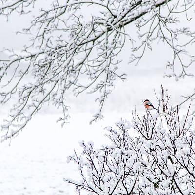 Bullfinch On A Snowy Branch Art Print by Aldona Pivoriene