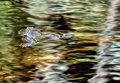 Bullfrog In Colorful Pond Art Print by Francis Sullivan