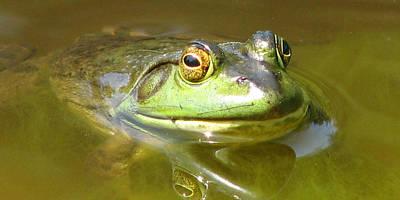 Photograph - Bullfrog Profile View by Natalie Rotman Cote