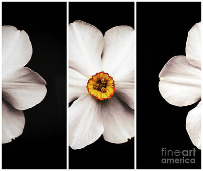 Photograph - Bulls Eye Panels by John Rizzuto