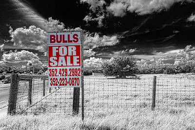 Photograph - Bulls For Sale by Lewis Mann