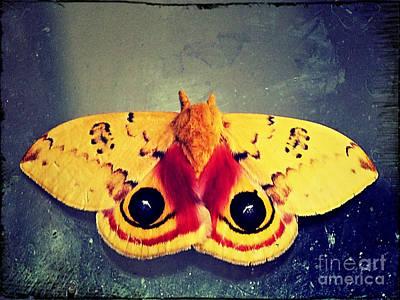 Bullseye Moth Art Print