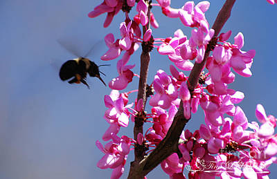 Photograph - Bumble Bee 20120406_128a by Tina Hopkins