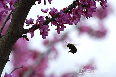 Photograph - Bumble Bee 20120409_187a by Tina Hopkins