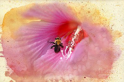 Rose Of Sharon Photograph - Bumble Bee Bliss by Betty LaRue