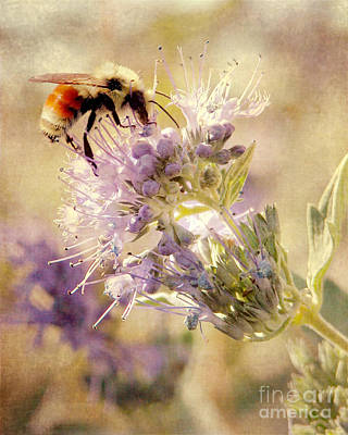 Photograph - Bumble Bee by Cindy Singleton