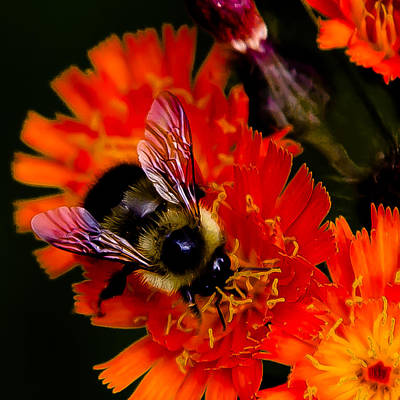 Florals Photograph - Bumble Bee Floral by David Patterson