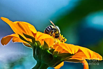 Photograph - Bumble Bee I by Ms Judi