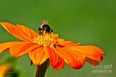 Photograph - Bumble Bee IIi by Ms Judi