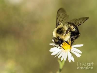 Bumble Bee Macro Art Print