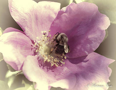 Photograph - Bumble Bee by Natalie Rotman Cote