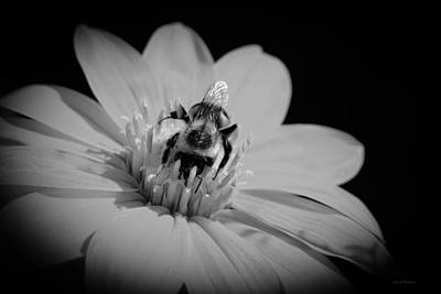 Photograph - Bumble Bee On Flower by Crystal Wightman