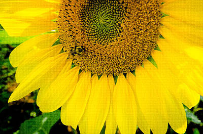 Photograph - Bumble Bee On Sunflower by Crystal Wightman