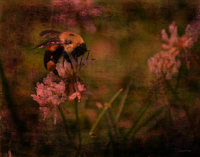 Photograph - Bumble Bee Serenade by Lesa Fine